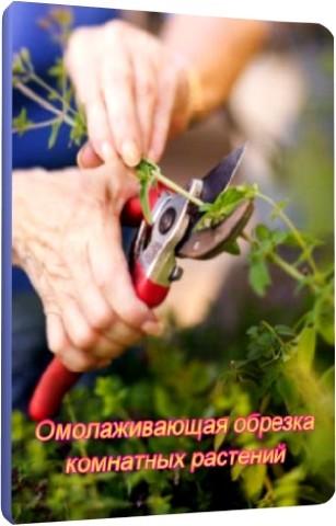 Омолаживающая обрезка комнатных растений (2011) DVDRip